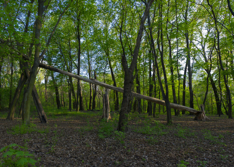 Ліс балки Музичиної