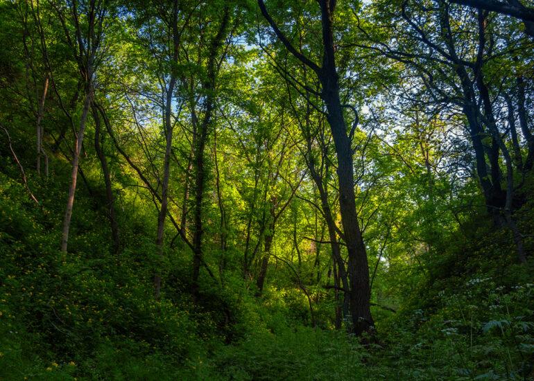 Хортицький ліс