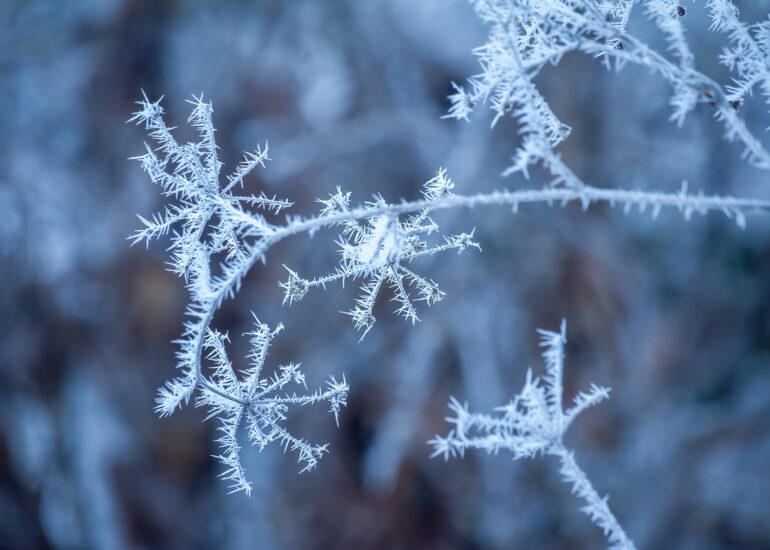 Зимові зірки