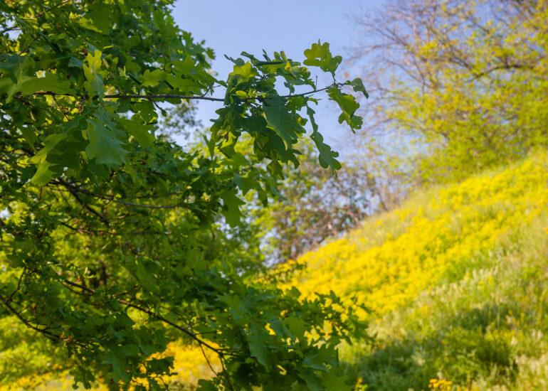 Весняні барви