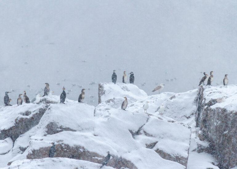 Запорізькі пінгвіни