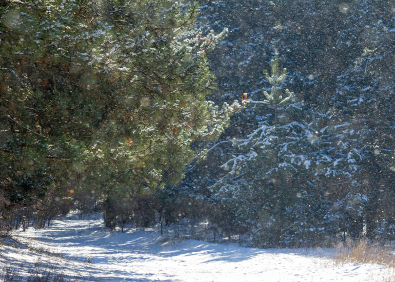 Казкові сніжинки