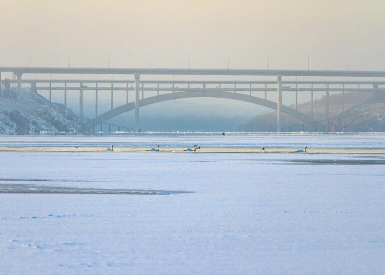 Міст та лебеді