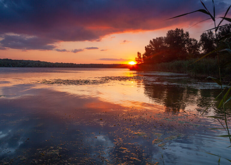 Захід Сонця в плавнях