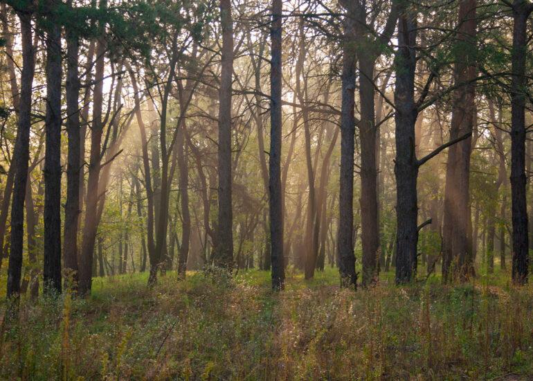Ранок в лісі