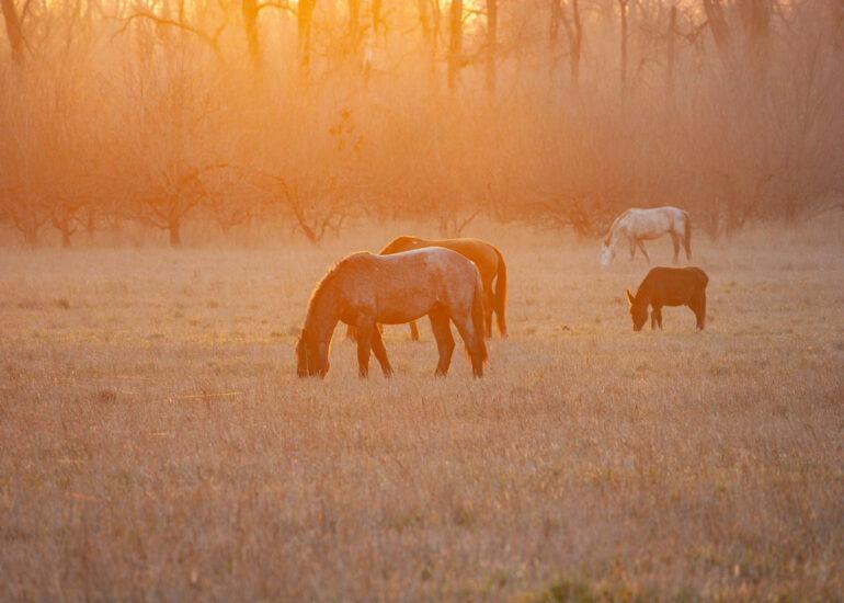 Коні в полі