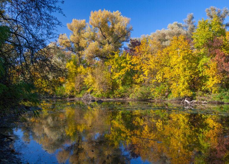 Осінь в плавнях