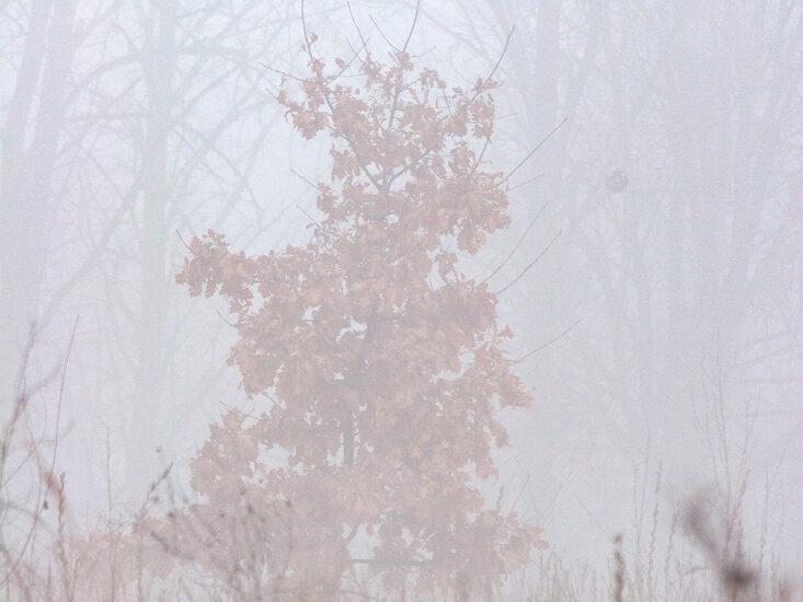 Самотність в тумані
