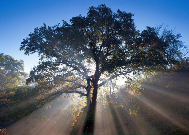 Ранкове світло