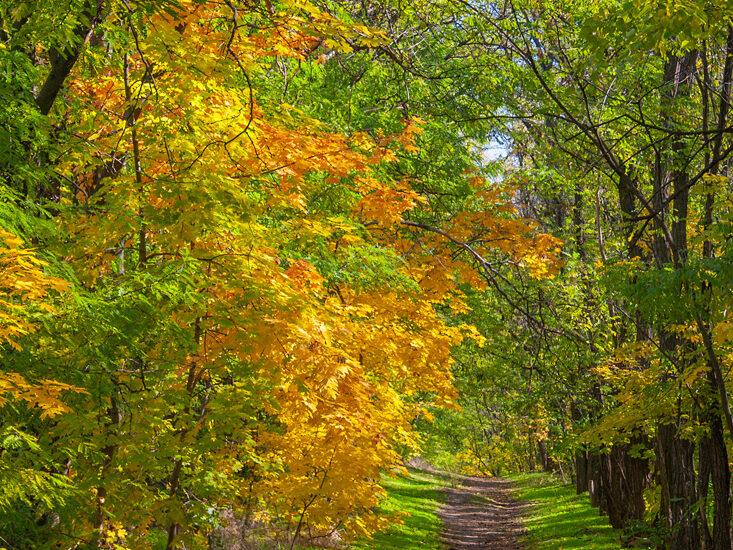 На осінній стежці