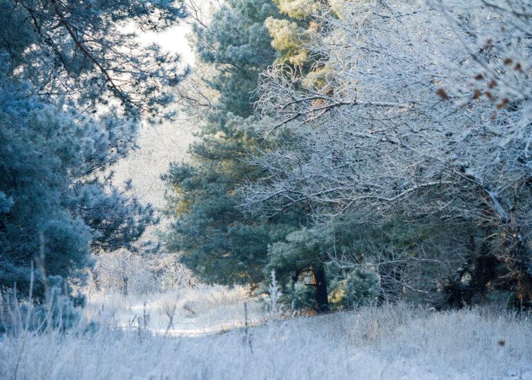 Сніжний ліс