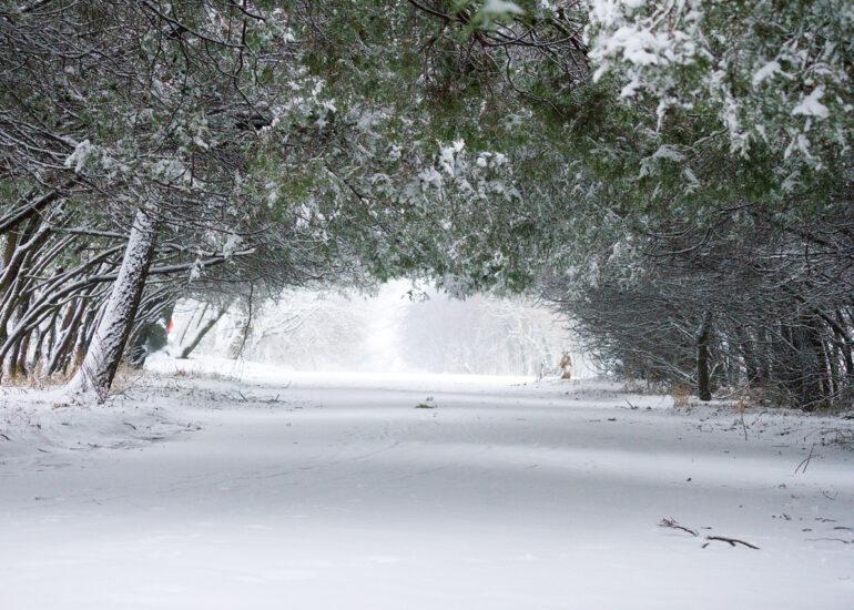 Сніжна алея