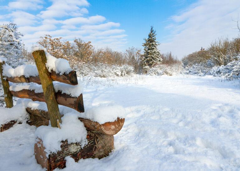 Зима в дендропарку