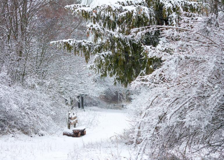 Зимовий затишок