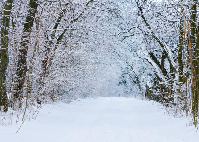 Зимовий тунель