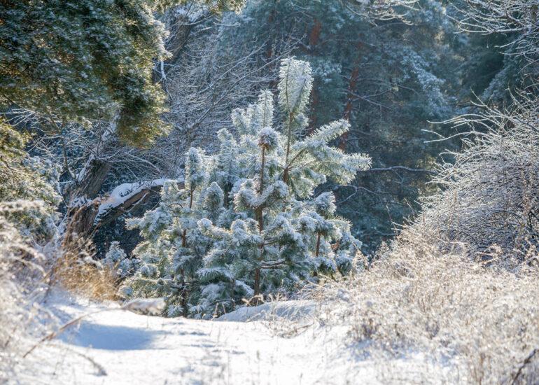 Сніжний дотик