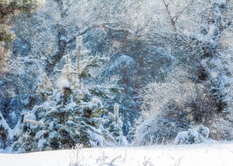 Сонячний снігопад