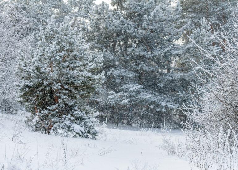 В обіймах зими
