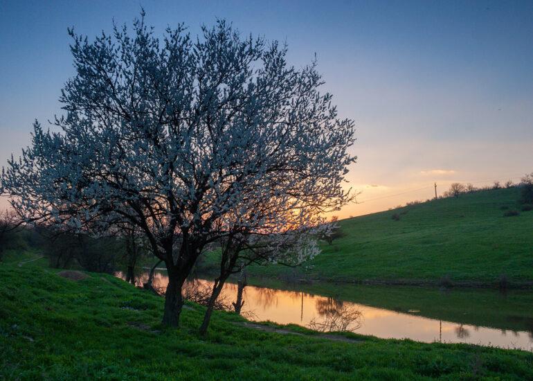 Вечір біля ставку