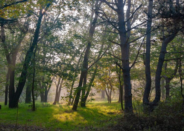 Казковий ліс
