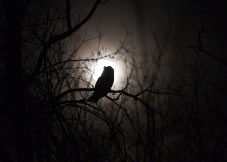 Сова та Місяць