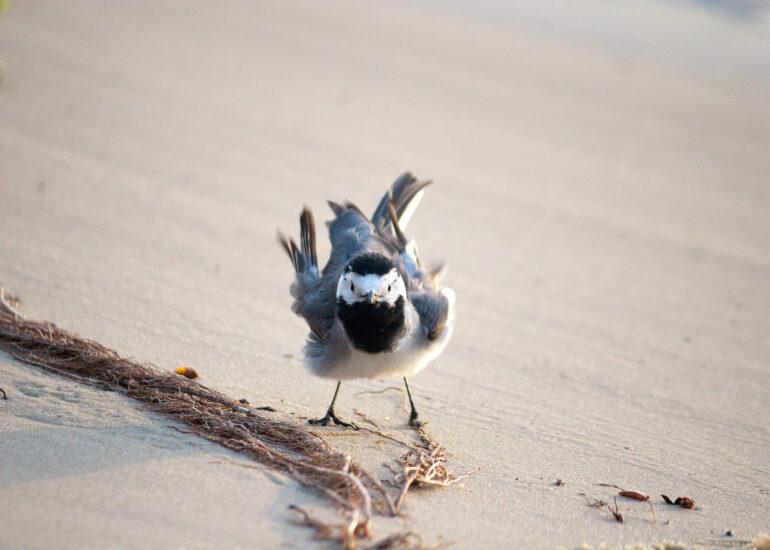 Серйозний птах