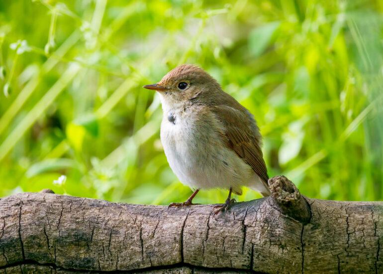 Пташка з кліщем