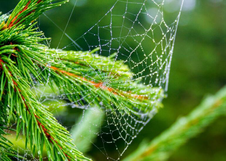 Крапельки в павутинні