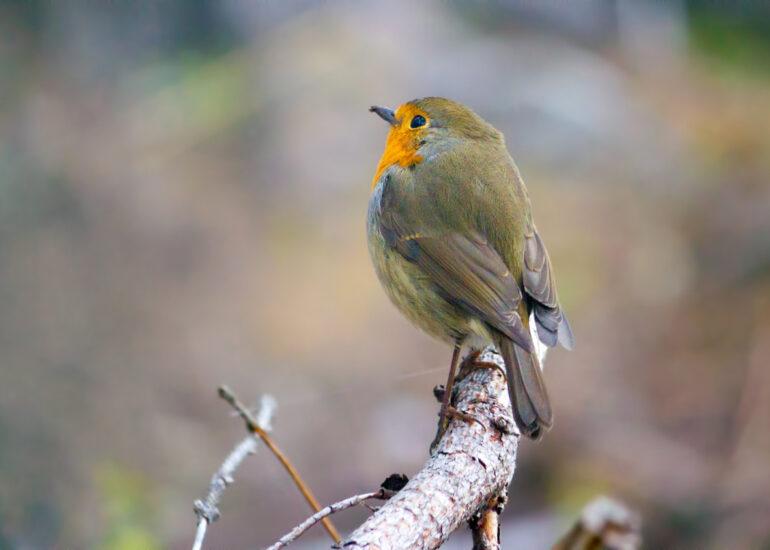 Допитлива пташка