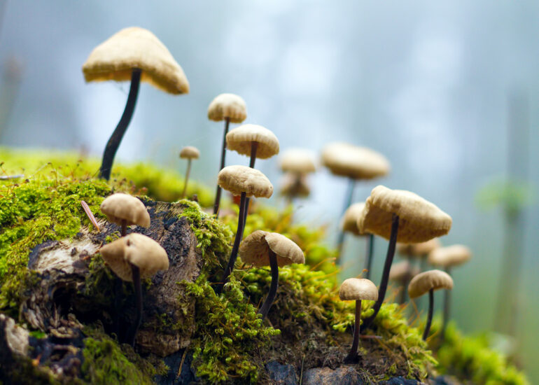 Маленький ліс